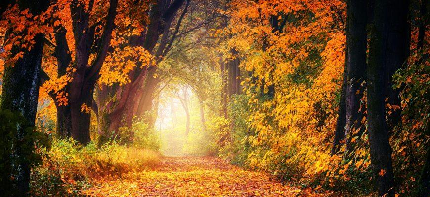 Парки Минска для фотосессий осенью