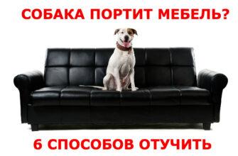 собака портит мебель как отучить