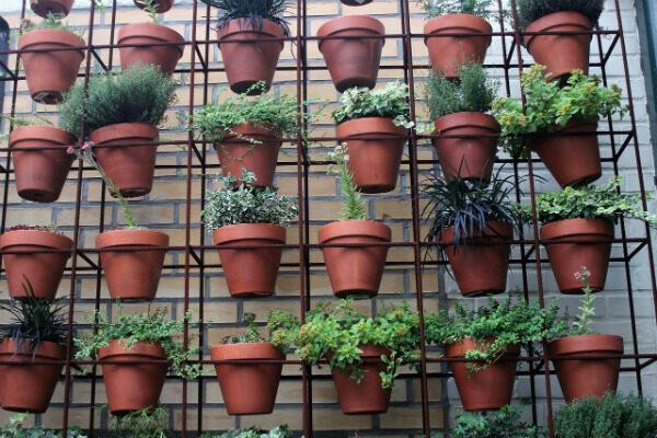 Как передаются болезни у растений