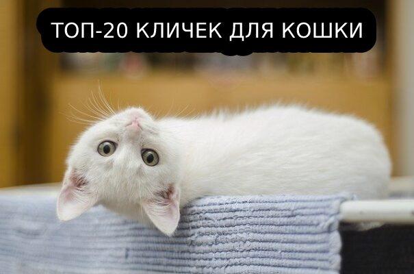 Лучшие клички для кошки